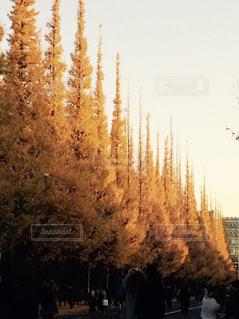 秋の写真・画像素材[594853]