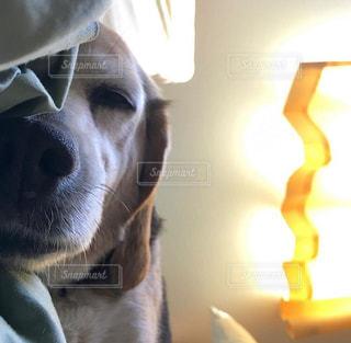 犬の写真・画像素材[483283]