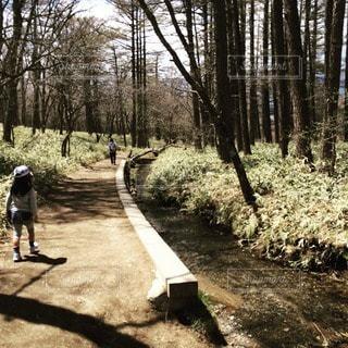 森の写真・画像素材[11183]