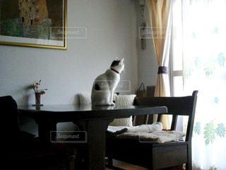 猫,リビング,ねこ
