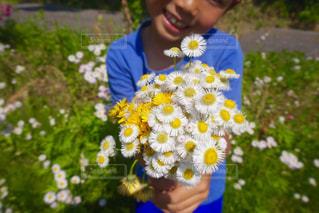 花束の写真・画像素材[488891]
