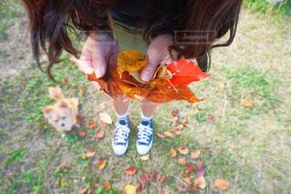 いくつかの草を食べている女の子の写真・画像素材[873543]