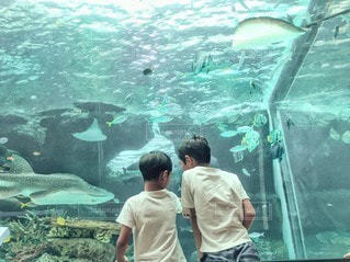 水族館の写真・画像素材[2562015]