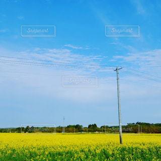 輝く花の写真・画像素材[1094964]