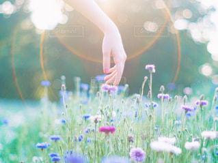 花と光と手の写真・画像素材[1407857]