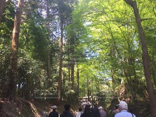 森林の写真・画像素材[483332]
