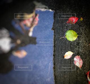 風景,空,秋,紅葉,水面,季節,鮮やか,落ち葉,人物,人,秋晴れ,秋空,雨水