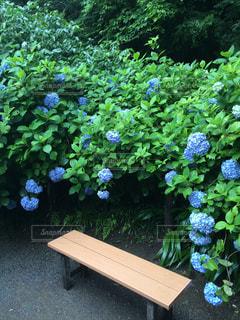 花の写真・画像素材[536213]