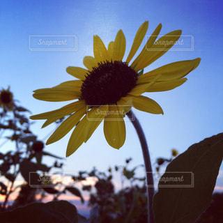 花の写真・画像素材[600511]