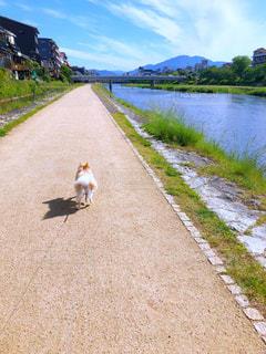 犬,ポメラニアン,京都,川沿い,鴨川,お散歩,ライフスタイル,晴れの日