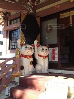 猫の写真・画像素材[566511]