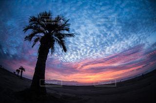 夕日を背景にした男の写真・画像素材[2795346]