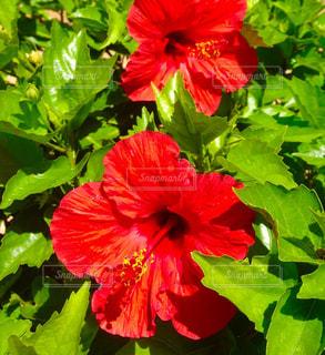 花の写真・画像素材[530645]
