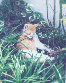 草木の中に座っている猫の写真・画像素材[2724638]