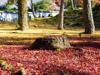 公園,秋,紅葉,屋外,京都,観光,樹木,切り株,南禅寺