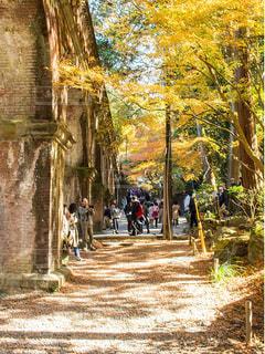 公園,秋,紅葉,京都,レンガ,観光,南禅寺,水路閣,歴史的