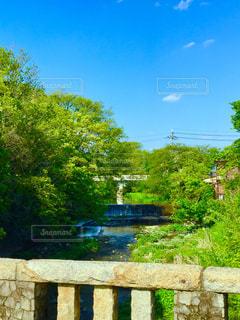 庭の木製ベンチの写真・画像素材[1112299]