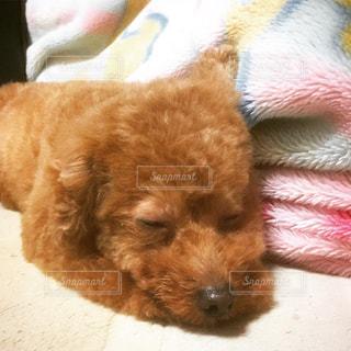 動物,ペット,寝顔,わんこ,顔,可愛い,雰囲気,素敵