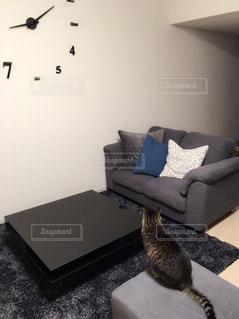 猫,インテリア,リビング,時計,ねこ,モノトーン,ソファ,マンション,ローテーブル