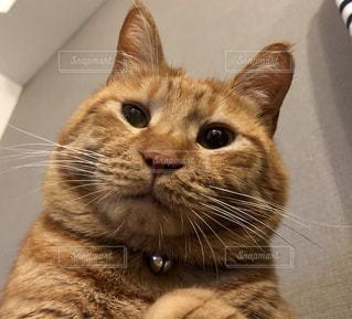 うちの猫の写真・画像素材[973518]