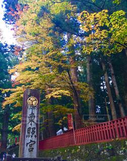 木の側面にある記号の写真・画像素材[1015016]