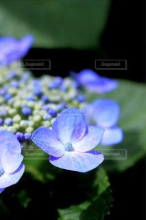 花の写真・画像素材[543370]