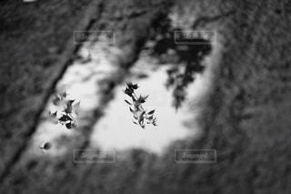 リフレクションの写真・画像素材[814292]