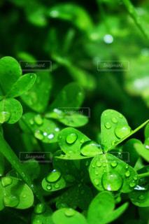 雨上がりの写真・画像素材[2107661]