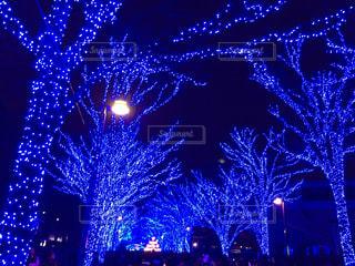 夜ライトアップされたクリスマス ツリーの写真・画像素材[934081]