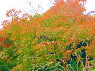 近くの木のアップ - No.871246