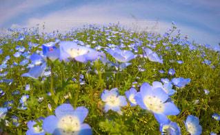 木の花の花瓶の写真・画像素材[1408201]