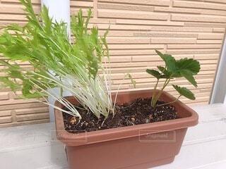 窓の前にある植物の写真・画像素材[4918244]