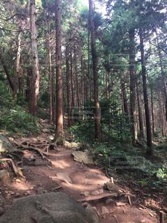 森の中の未舗装の道のツリーの写真・画像素材[800464]