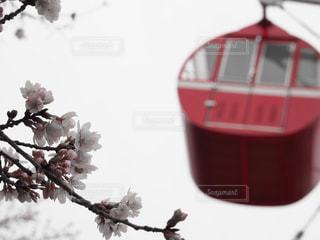 桜 - No.545428