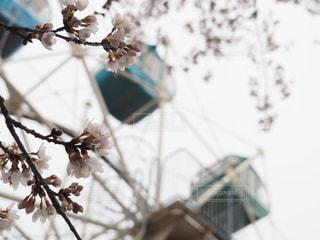 春 - No.558060