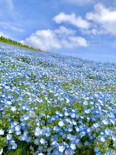 花のクローズアップの写真・画像素材[2260407]