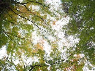 近くの木のアップ - No.874389