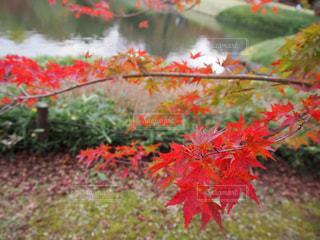 木の赤い花 - No.874390