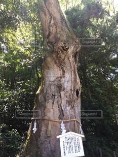 木の写真・画像素材[490780]