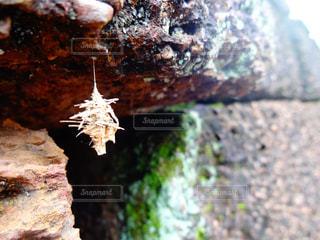 近くの岩のアップの写真・画像素材[808982]
