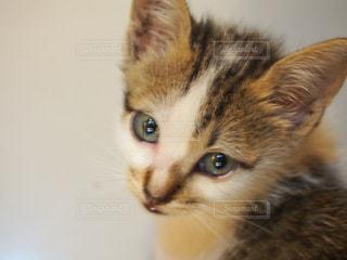 猫,悲しい,ねこ,愛しい,ネコ