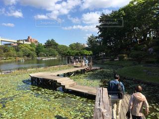 公園の写真・画像素材[491455]