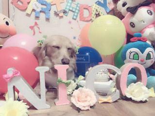 犬,寝顔,誕生日,ミニチュアダックスフンド