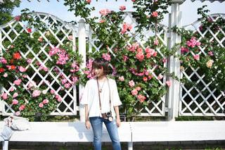 花の写真・画像素材[497858]