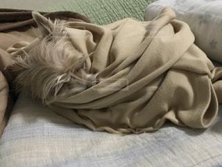 犬,寝顔,うたた寝