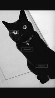 暗い部屋に座って黒い猫 - No.818502