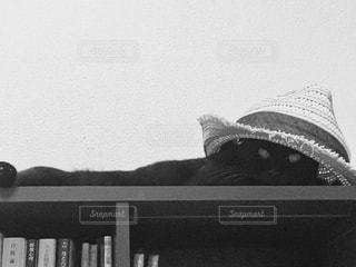 夏の終わり、麦わら帽子の猫の写真・画像素材[846719]