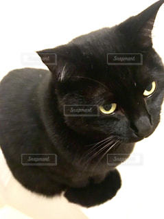 黒猫の写真・画像素材[901407]