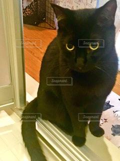 黒猫の写真・画像素材[974807]