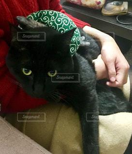 風呂敷を背負う黒猫の写真・画像素材[981599]